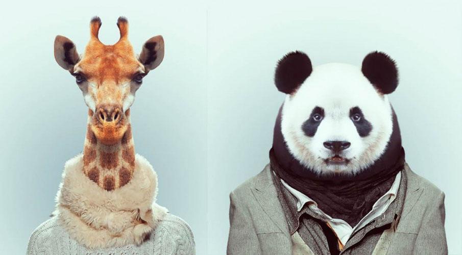 zoo-portrait-yago